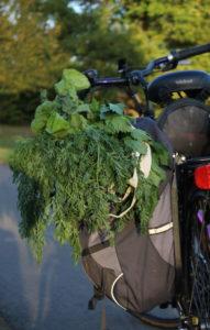 Satteltaschen mit Karottengrün, Mangold und Sellerie