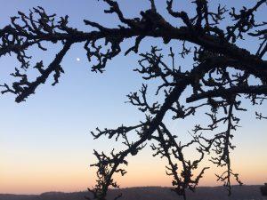 Sonnenuntergang mit Mond mit blattlosem Apfelbaum