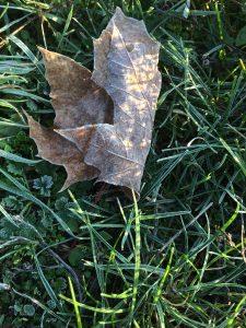 Bodenfrost und ein Blatt